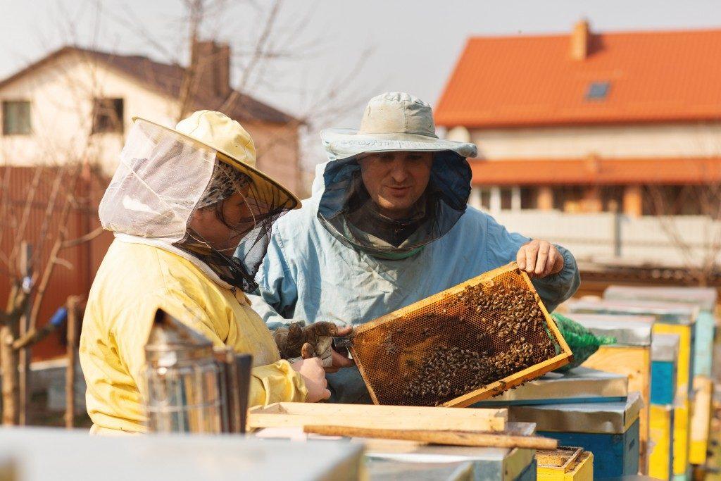 honeybee farmers